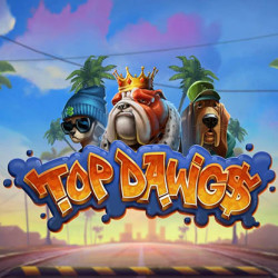 Top Dawg$ Rewards Lucky Player Dazzles With €500,000