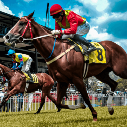 How to Bet on Horse Racing: A Complete Beginners-Guide